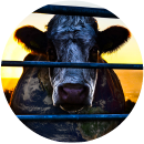 cowspiracy-01